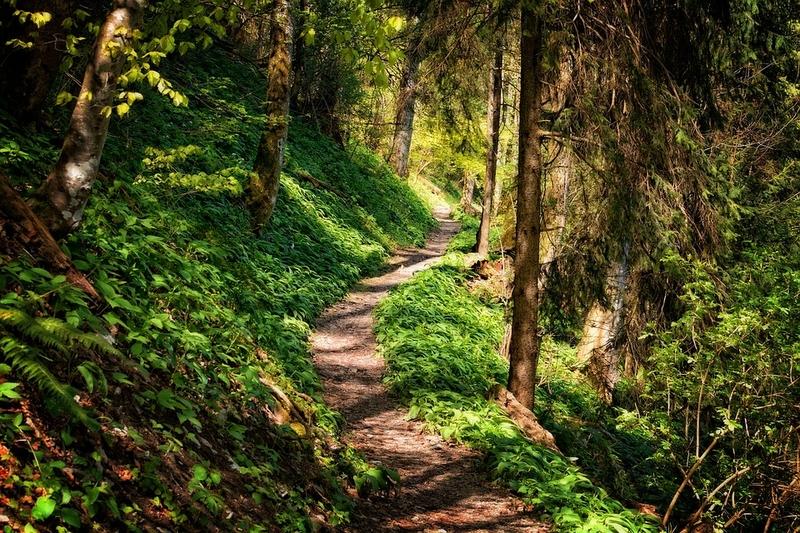 19 años cumple la marcha senderista Bosque del Ambroz, este año con la posibilidad de realizar Ruta Corta