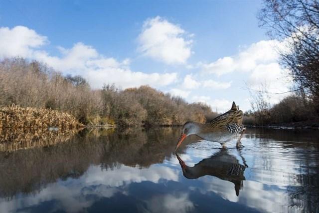 La laguna', de Francisco Motilva, primer premio del concurso fotográfico de la Feria Internacional de Ornitología (FIO)