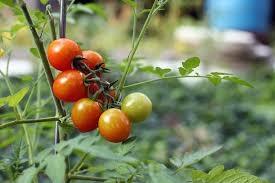 Piornal albergará la segunda semana de la agroecología del 3 al 10 de marzo
