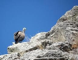 El Patronato del Parque Nacional de Monfragüe propone un programa de acción selectiva de determinadas especies