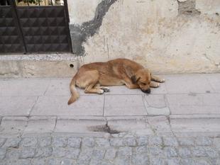 La Protectora 'El Refugio' de Plasencia recoge más de 80 perros en el primer semestre de 2018