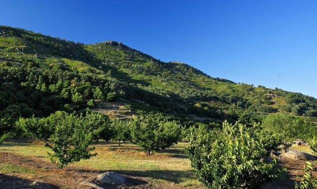 Nuevo paquete de ayudas para apoyar a las empresas del sector agroalimentario del Valle del Jerte