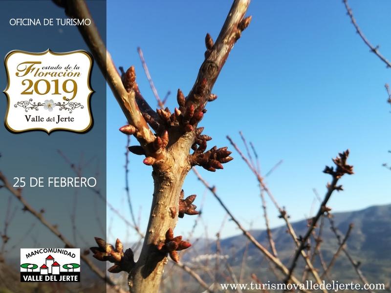 La Oficina de Turismo del Valle del Jerte comienza a informar sobre el estado de la floración 2019
