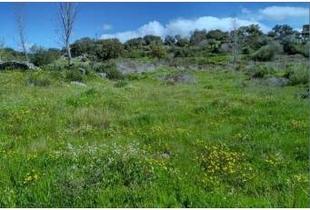 La localidad de Valdeobispo contará con huertos sociales a finales del mes de abril
