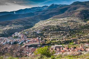 La floración ha comenzado en el Valle del Jerte. Primavera y Cerezo en Flor 2019