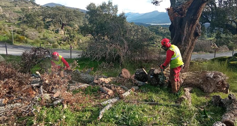 Comienzan los trabajos de reforestación en el Monte Valcorchero